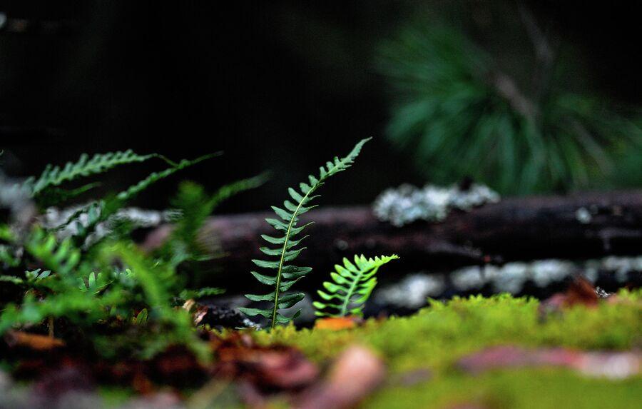 Зеленая листва пробивается в середине осени. Свердловская область