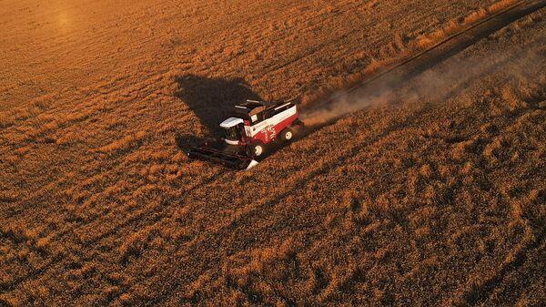 Сбор урожая пшеницы в Ростовской области