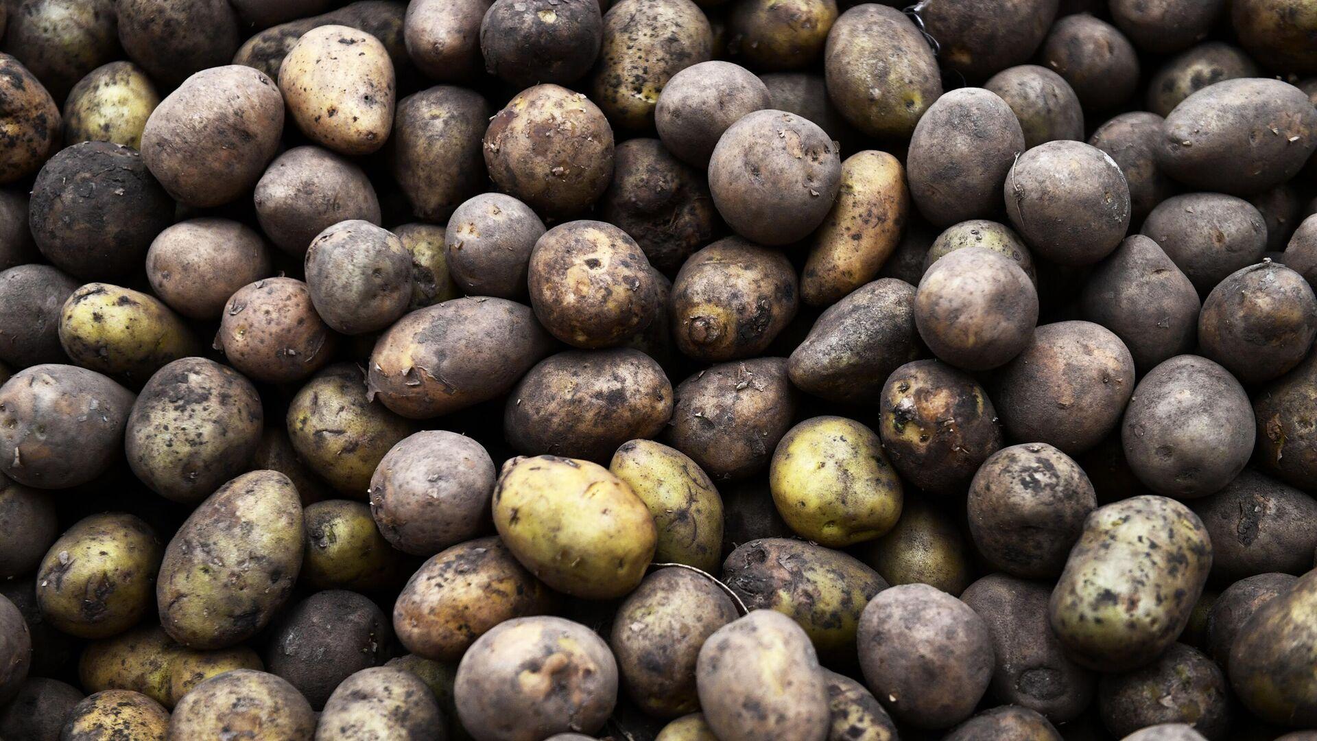 Минсельхоз спрогнозировал достаточный для внутреннего рынка объем урожая