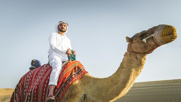 Мужчина на верблюде в пустыне Катара