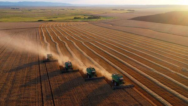 Уборка урожая пшеницы на поле
