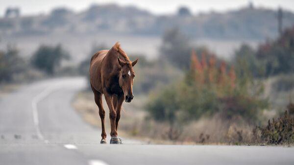 Лошади в Белогорском районе Крыма