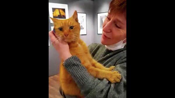 Найден кот Ося, пропавший из музея Анны Ахматовой в Петербурге