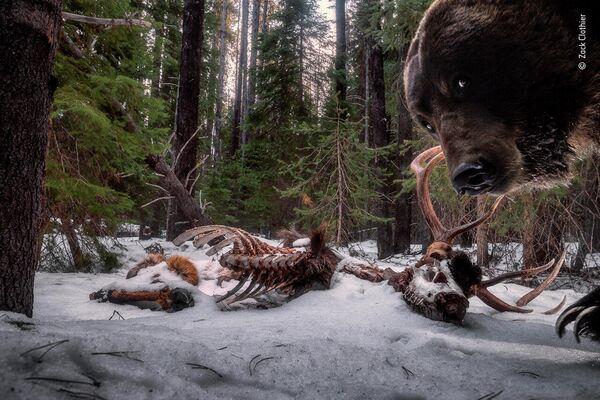 Работа фотографа Zack Clothier в фотоконкурсе Wildlife Photographer of the Year 2021