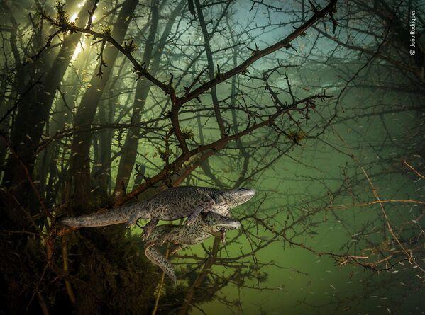 Работа фотографа João Rodrigues в фотоконкурсе Wildlife Photographer of the Year 2021