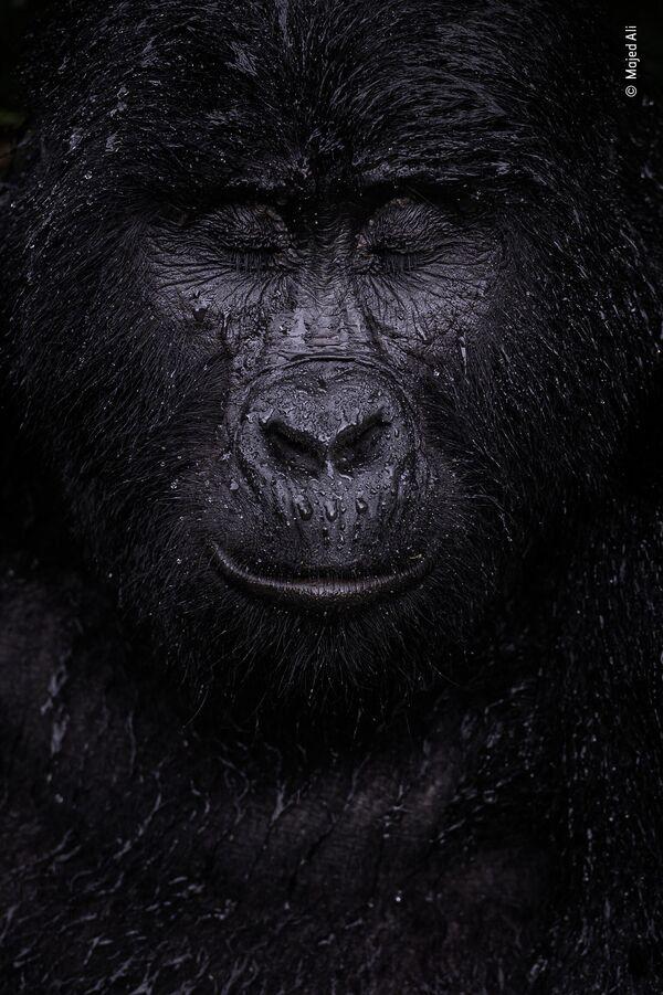 Работа фотографа Majed Ali в фотоконкурсе Wildlife Photographer of the Year 2021