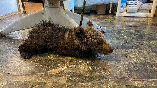 Медвежонок, найденный на дороге в районе границы Челябинской области и Республики Башкортостан