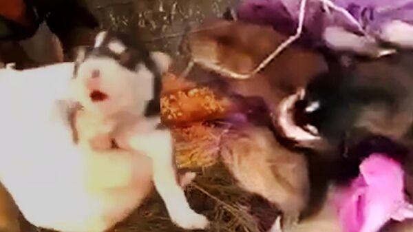 Водители мусоровоза спасли щенков из мусорного пакета. Видео очевидцев