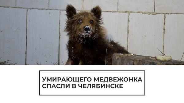 Ветеринары спасают потерявшегося медвежонка