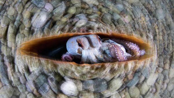 Работа фотографа Alessandro Grasso Circular Octopus, занявшая 1-е место в категории Подводный мир в фотоконкурсе Close-up Photographer of the Year 2021