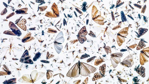 Работа фотографа Pal Hermansen Insect diversity, занявшая 1-е место в категории Насекомые в фотоконкурсе Close-up Photographer of the Year 2021