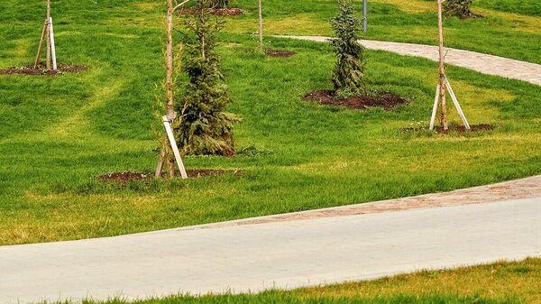 В Пресненском районе высадят около двух тысяч деревьев и кустарников