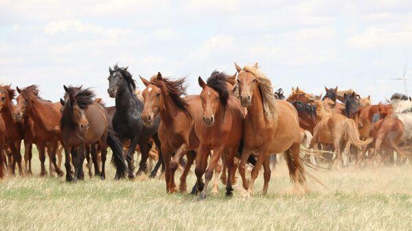 Лошади в степях Внутренней Монголии, Китай