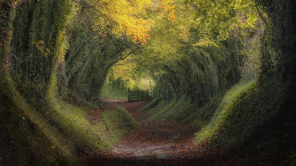 Работа фотографа Mara Leite Morning at Countryside, занявшая первое место в категории Landscape Photographer of the Year в фотоконкурсе UK Landscape Photographer of the Year 2021