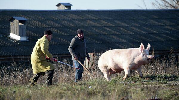 Рабочие на ферме в селе Калиновка Киевской области