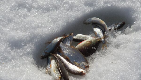Рыбалка. Архивное фото