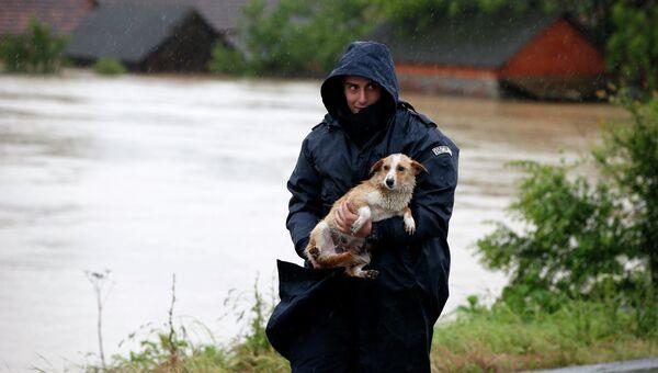 Полицейский выносит из зоны затопления собаку. Город Лазаревац, Сербия