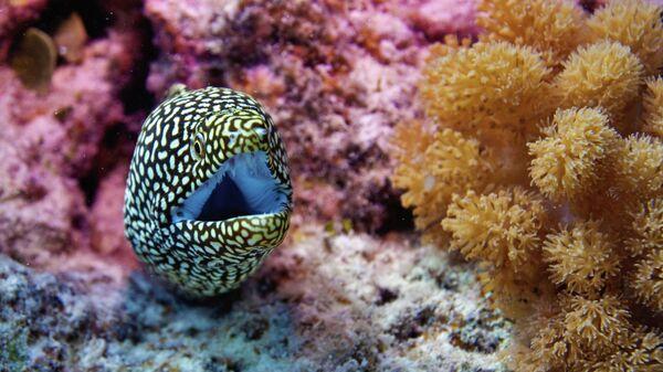 Подводный мир. Остров Кокос