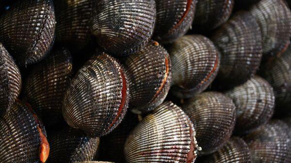 Моллюски. Архивное фото