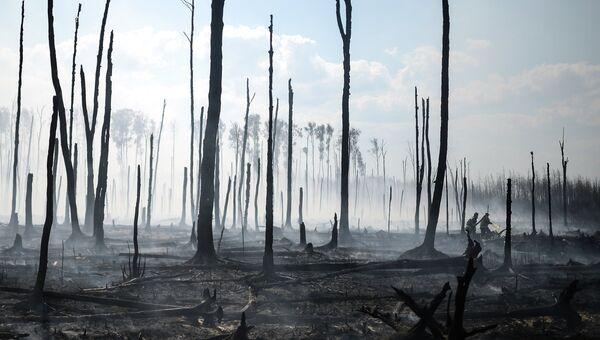 Лесные пожары в Тверской области. Архивное фото