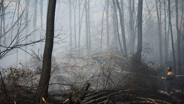 Сотрудник пожарной охраны работает на месте лесных пожаров в Тверской области. Архивное фото