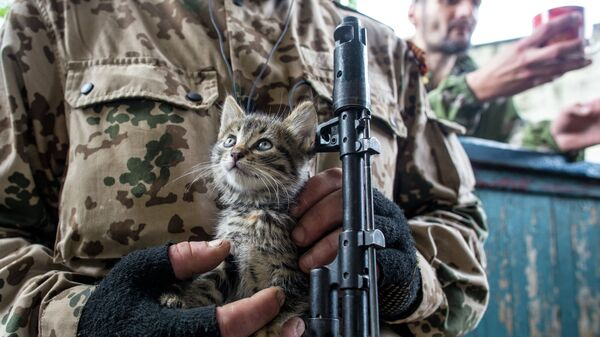 Котенок по кличке Псих на руках у ополченца