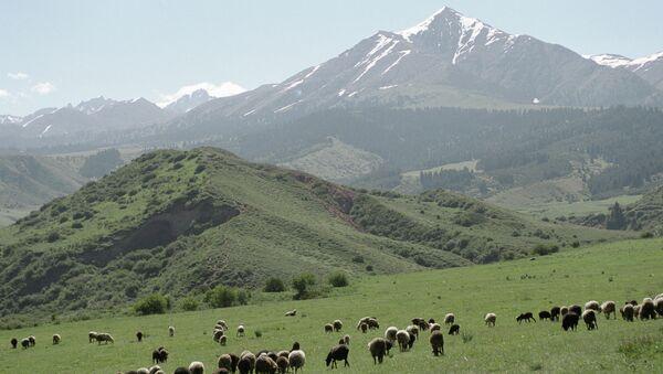 Пастбища в горах Тянь-Шаня (Киргизия)