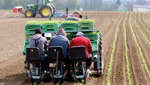 Фермеры на поле в Германии. Архивное фото