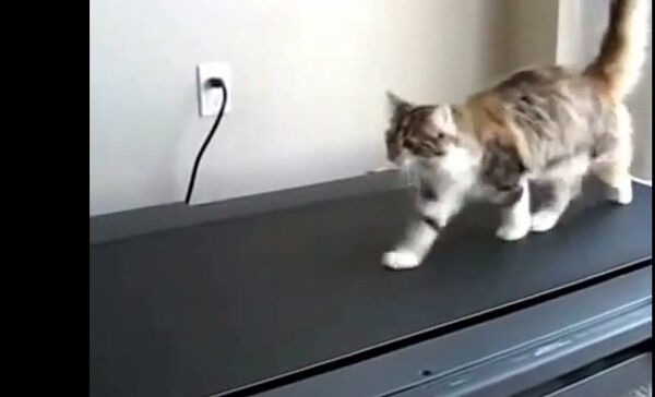 Кошачий фитнесс или завидное упрямство
