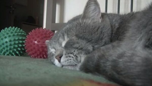 Кот разговаривает во сне