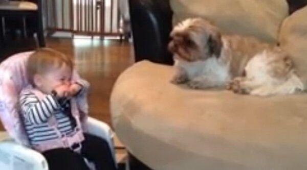 Видео в YouTube: ребенок и собака плачут