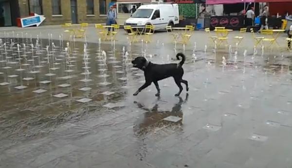 Собачьи радости: поиграть и освежиться