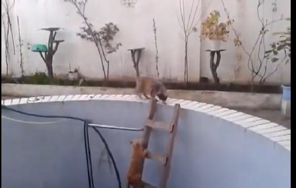 Кошачья драка с неожиданным финалом