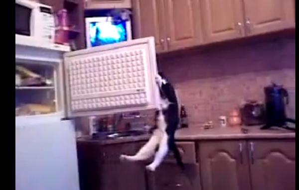 Кот, который сам себя прокормит
