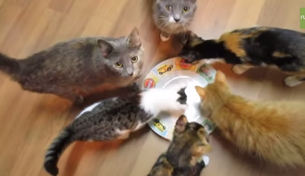 Сразу несколько кошек попробовали на вкус невидимый деликатес