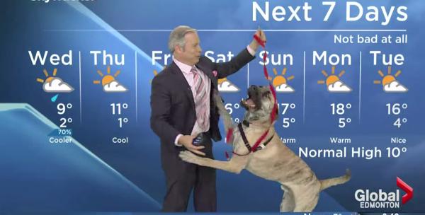 Прогноз погоды по-собачьи