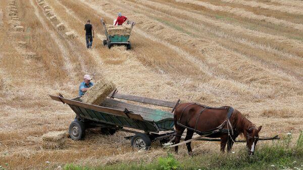 Крестьяне грузят сено на телеги запряженные лошадьми в полях под селом Броды, Украина. Архивное фото.