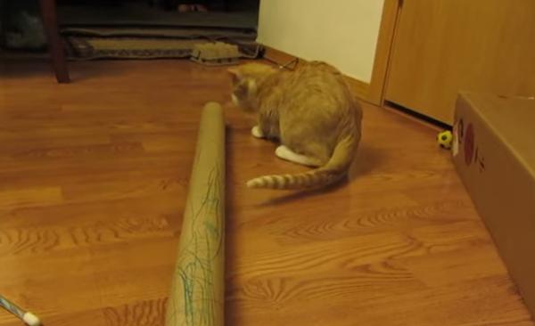 Лайфхак: как развлечь кота подручными средствами