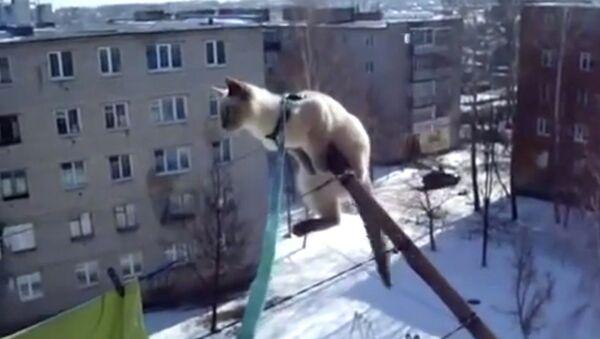 Кот-экстремал