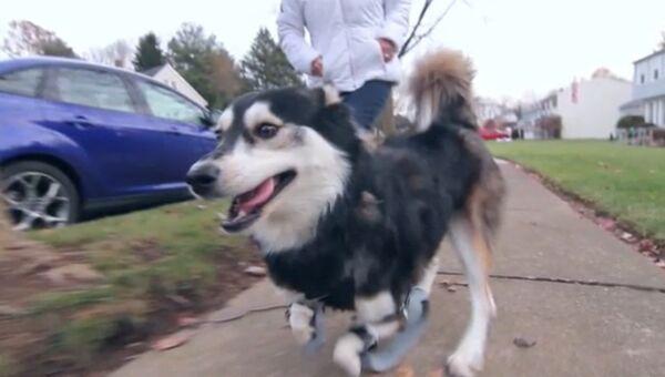Собачье счастье, или Как 3D-технологии делают мир лучше