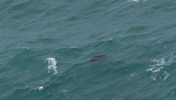 Объект в Яванском море, возможно, являющийся частью фюзеляжа пропавшего самолета авиакомпании Air Asia. Архивное фото