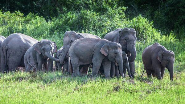 Слоны. Архивное фото