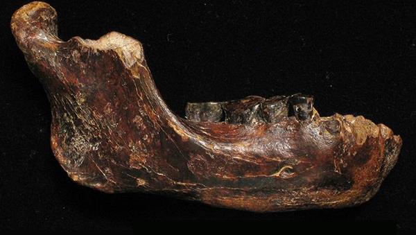 Фотография фрагмента челюсти «тайваньского человека», выловленная рыбаками в море
