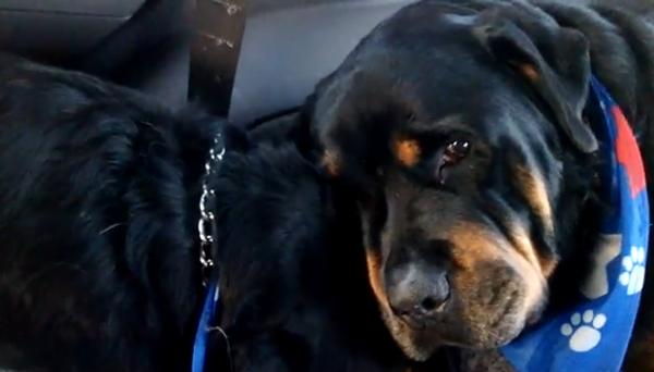 Хит YouTube: собаки тоже плачут