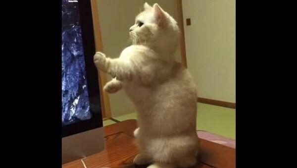 Как заставить кота встать по стойке смирно