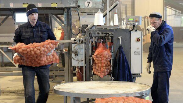 В цехе упаковки картошки на агропромышленном предприятии в Тверской области
