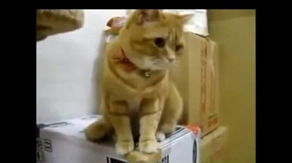 Кот в нетерпении, или Чудо, которое кормит