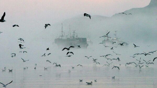 Рыболовецкие суда у берегов острова Шикотан в бухте Крабовой. Сахалинская область. Архивное фото