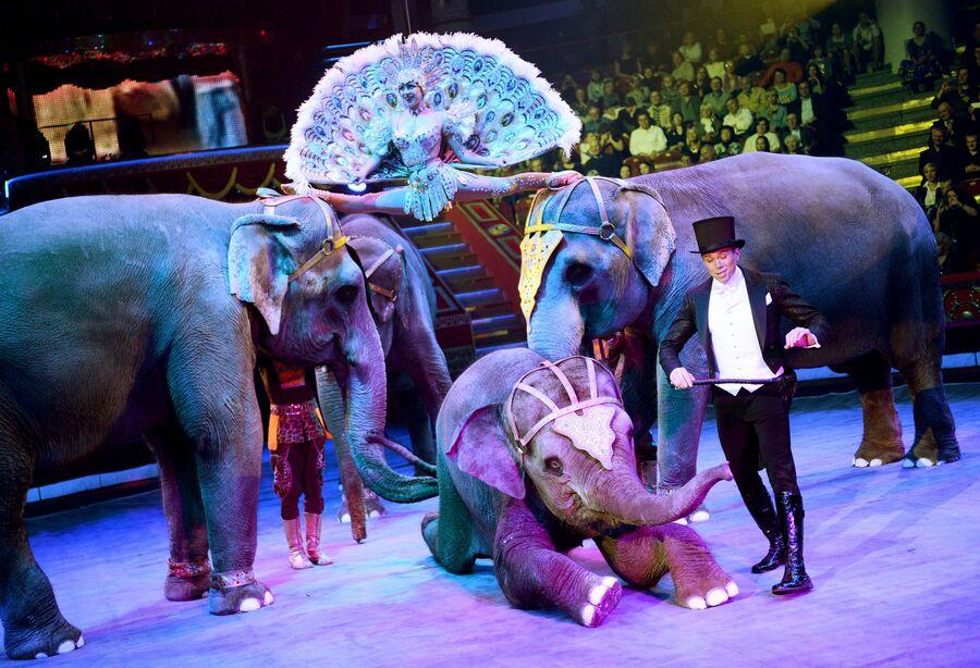 Артисты в номере со слонами во время юбилейного представления в честь 95-летия Российского государственного цирка в Цирке Никулина