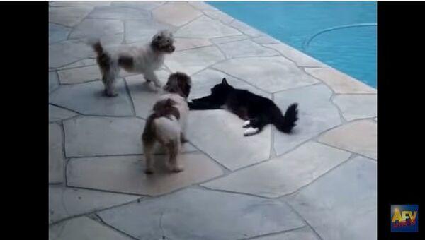 Кот и надоедливая собака